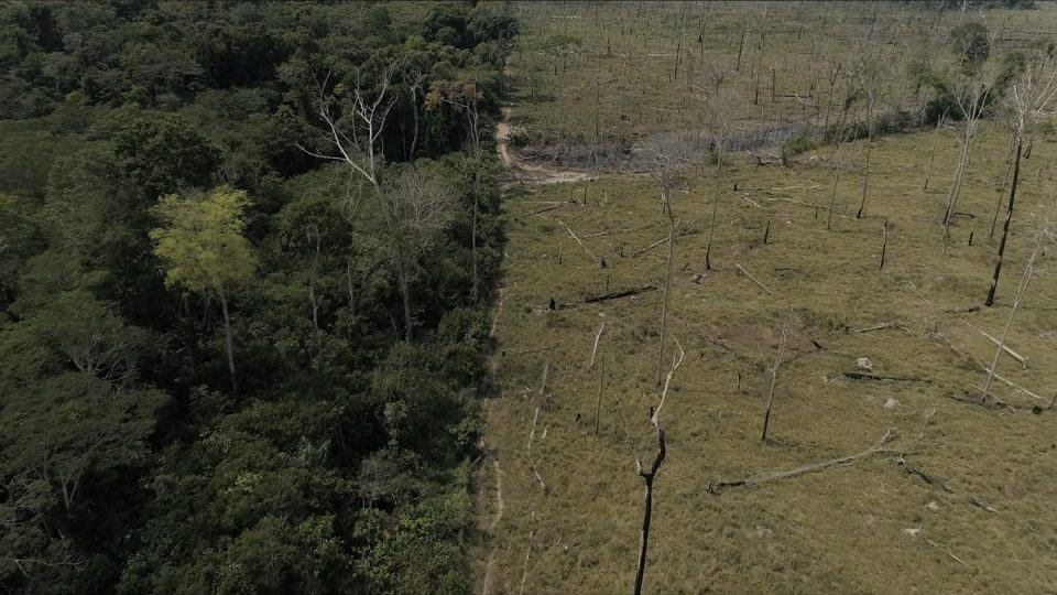 This year Amazon forest destruction has increased by 85%