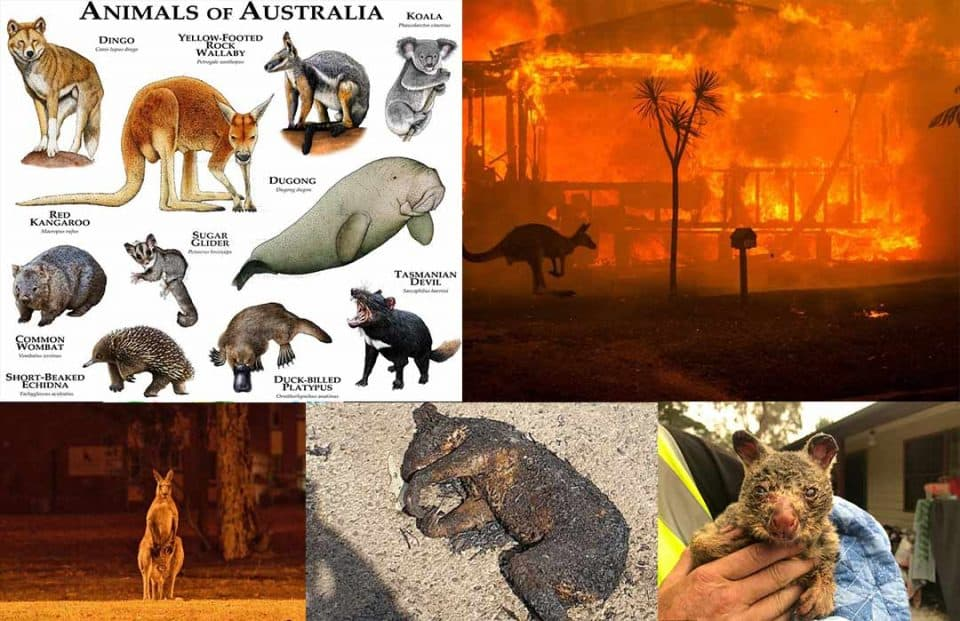 The bushfire has killed almost half a billion animals in Australia: The University of Sydney estimates the report