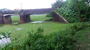 Twelve rivers in Jhenaidah are illegally occupied, aquatic animals and the environment including fishes are under threat