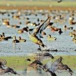Bird Census 2020 : Total 53 Species of Birds Are Found