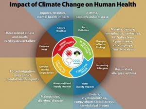 Climate change and globalization can increase viral diseases