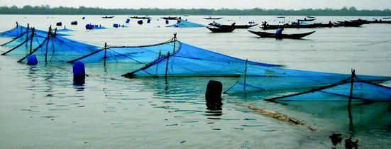 Fishing with current nets using bamboo fence at Cox's Bazar (Image Courtesy: Springer Link)