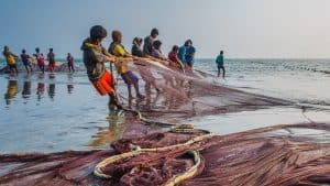 Traditional Fishing with current nets at Cox's Bazar (Image Courtesy: Fiveprime)