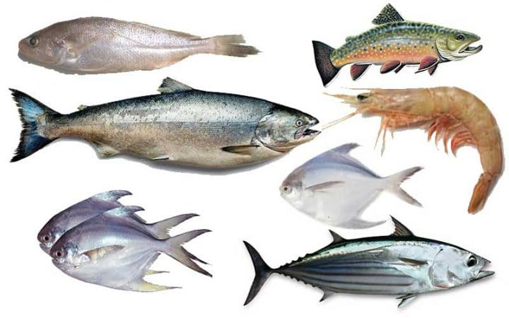 Seven-types-of-species-under-threat-of-extinction-in-the-Bay-of-Bengal