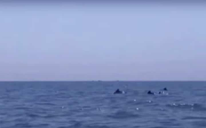 dolphins have been seen playing in the Bay of Bengal near the seashore