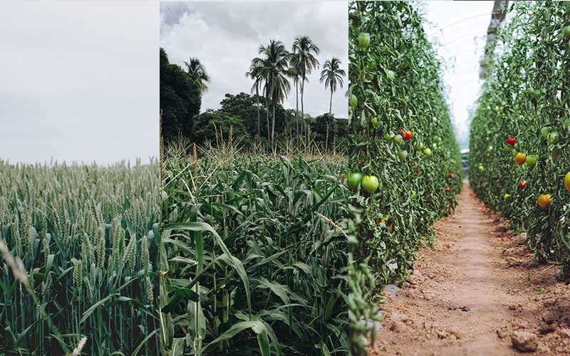 Agriculture Could be the Main Dynamic Force of the Economy