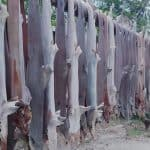 Bangladesh Forest and Fisheries Departments Seized 21 barrels of Shark oil, including 10,000 dried sharks.