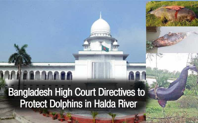 Bangladesh High Court Directives to Protect Dolphins in Halda River