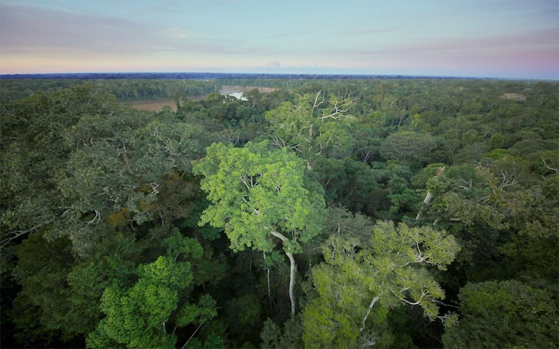 Brazilian government takes Steps To protect the Amazon