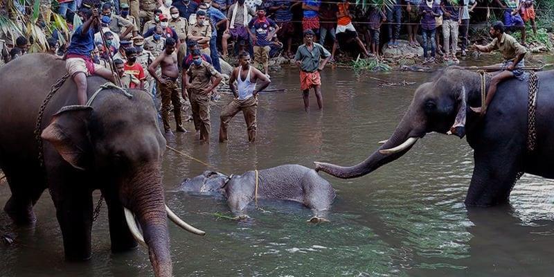 Elephant Killing by Feeding Explosive