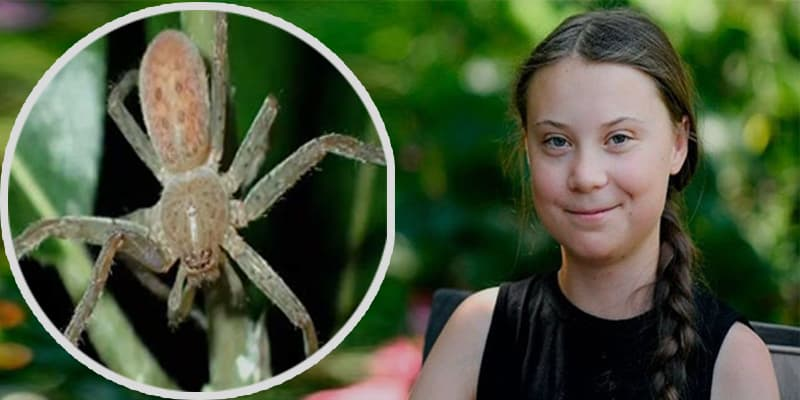 New Species Spider Named After Greta Thunber