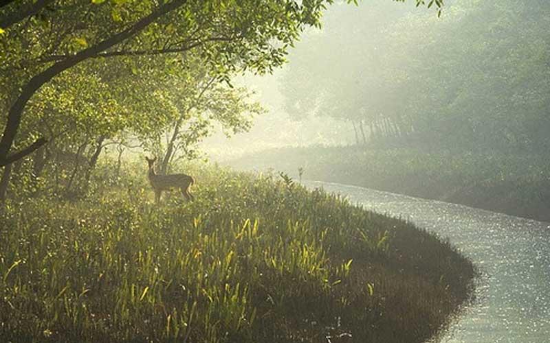 Nijhum Dwipp - the Second Largest Mangrove Forest in Bangladesh