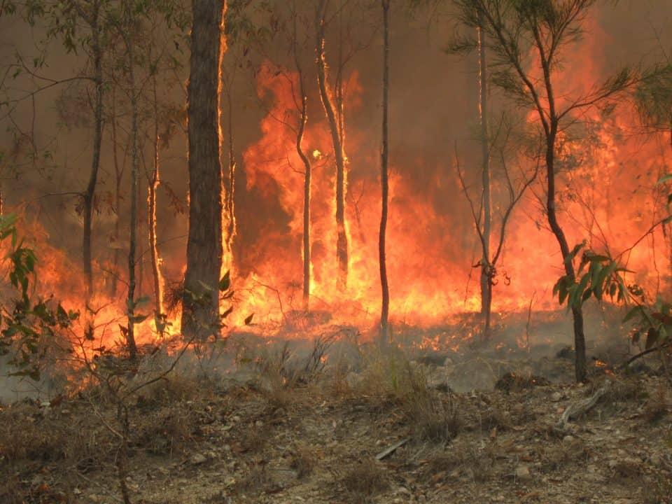 Australia Bushfire Nearly 3 Billion Wildlife Killed