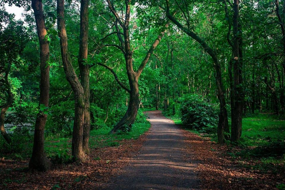 Bangladesh National parks to be closed for another three months to return to nature