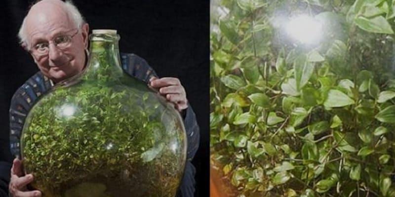 Bottle Captive Tree Aged 48 Years