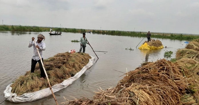 Thousands of Hactors of Paddy Fields Submerged by Floodwater