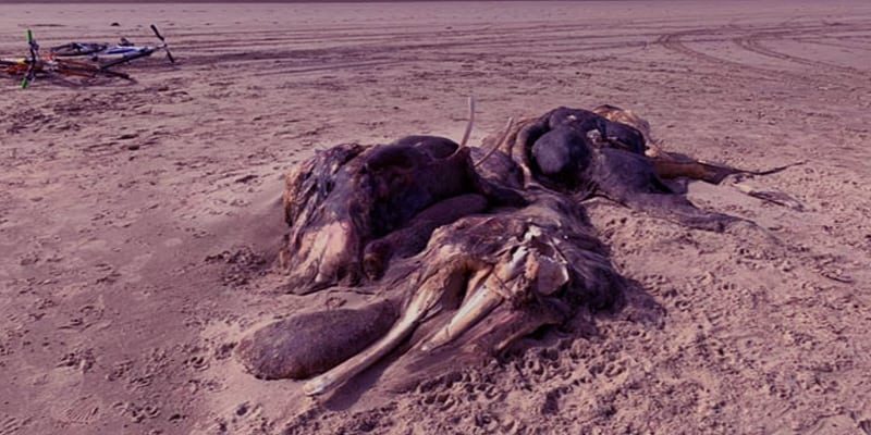 A Mysterious Creature Found on the Beach in Britain