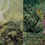 Discovery of 30 New Species in the Deep Sea