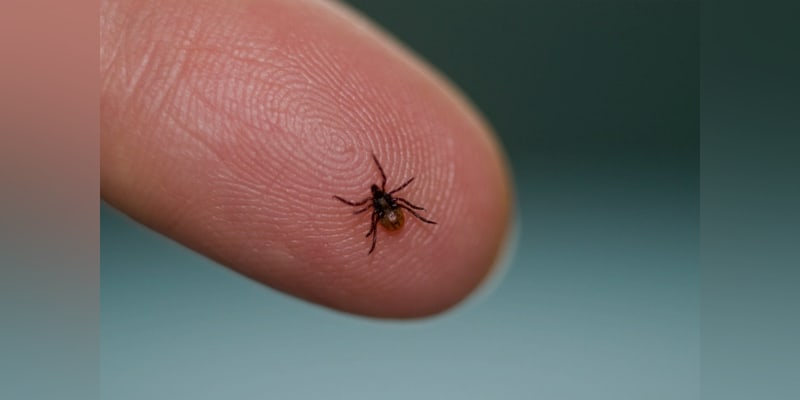 Doctors are Panic About Small Insect Attacks