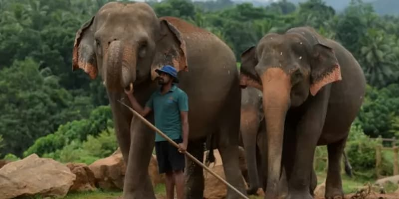 The death toll in the human-elephant conflict in Lockdown has dropped in Sri Lanka