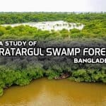 A study of Ratargul Swamp Forest, Bangladesh
