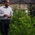 Artemisia Plant in the treatment of corona is an ideal model to the scientists