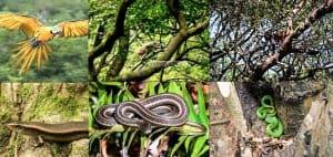 Most common biodiversity that decreasing tremendously
