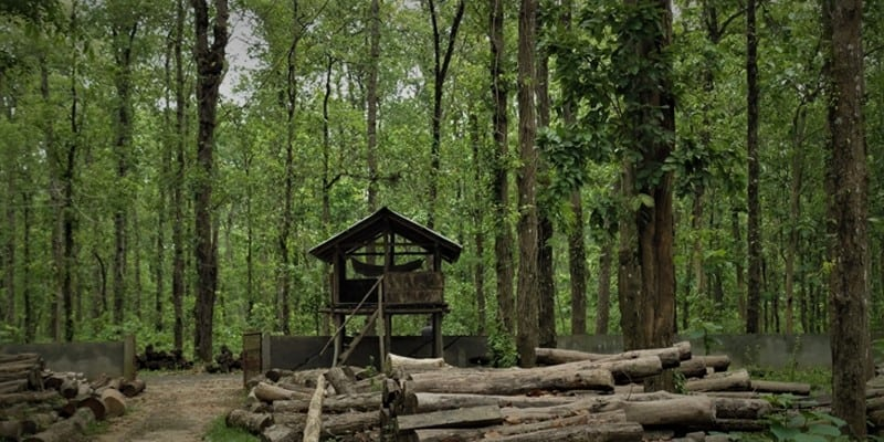 Around 18,000 Trees, Including 1,000 Gazari to be cut to Lay Gas Pipeline in Bangladesh