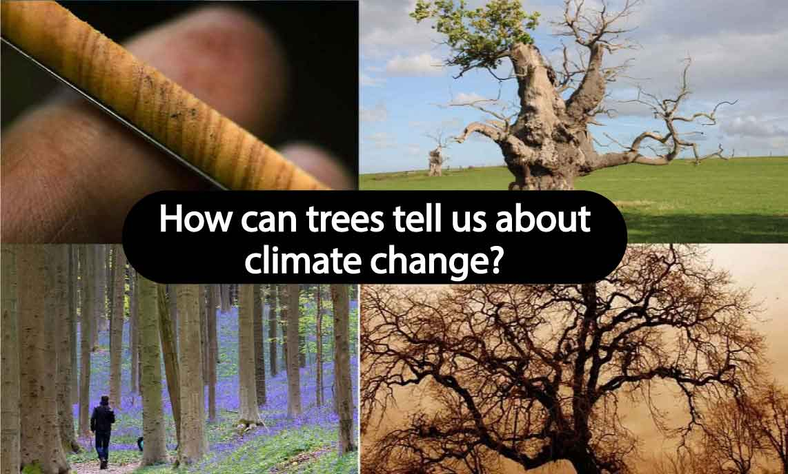 How can trees tell us about climate change?