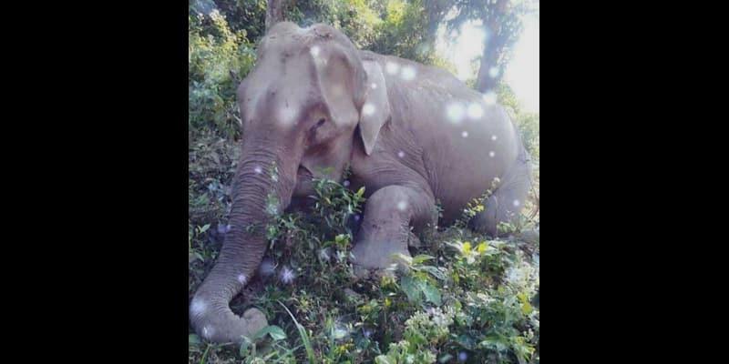 Ninety elephants killed in 17 years in Bangladesh