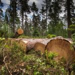 Climate project is being implemented by cutting down trees !!