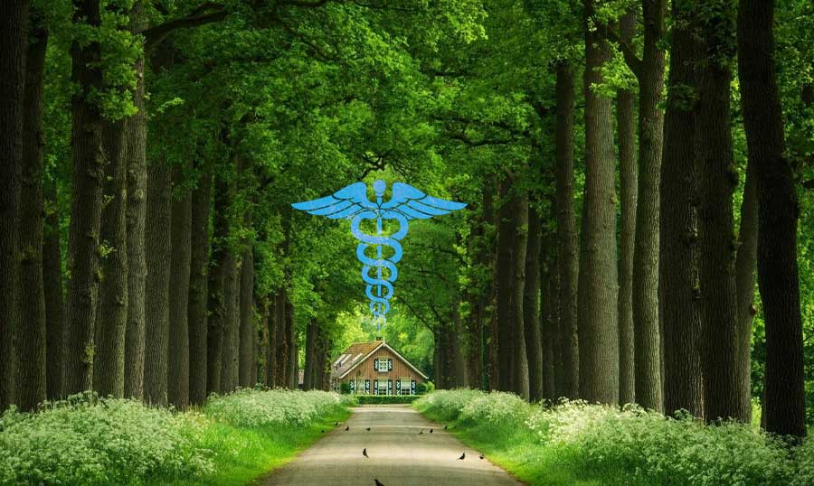 First-ever in history! A hospital established for the care of Trees
