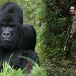 A survey says the armed struggle is responsible for the extinction of gorillas
