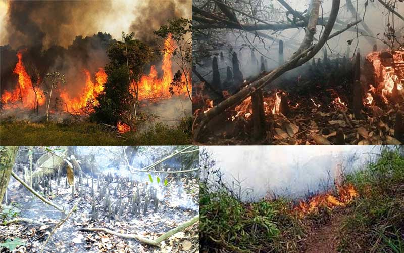The fire of Sundarbans finally extinguished after 30 hours, burned 3 acres of forest