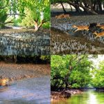 Biodiversity in the Sundarbans is in a great threat to face a massive loss