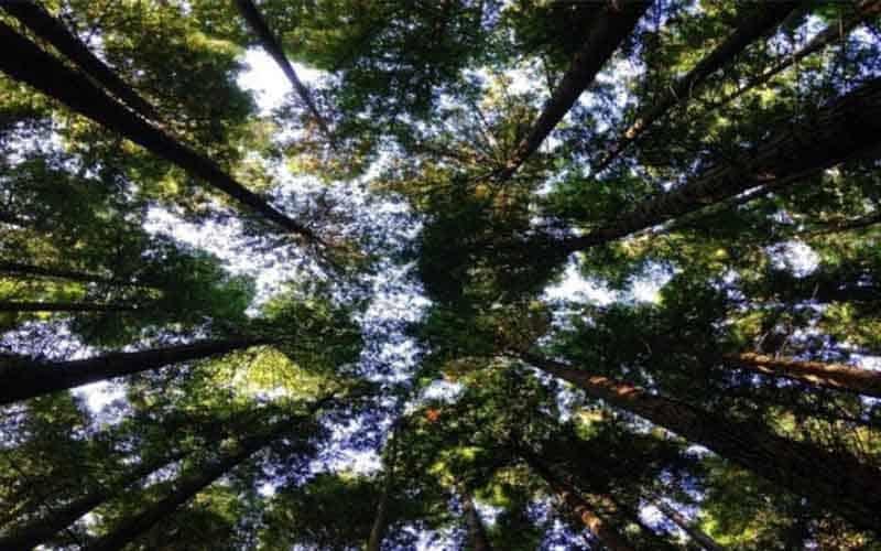 Demanding to Raise Funding Triple to Restore Nature