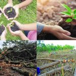 There is an account of tree plantations but not any account for tree destructions